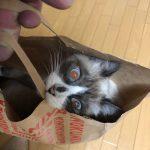 紀ノ国屋で買いました(^◇^;)