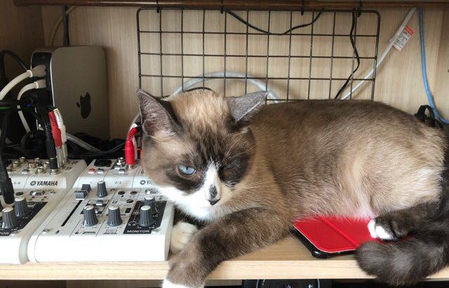 久しぶりに、どうみてもスノーシューな保護猫メルの話題