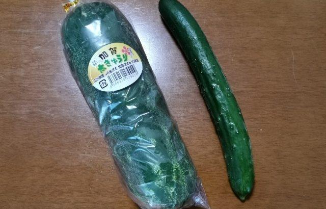 加賀野菜のひとつ、加賀太きゅうりを買いました