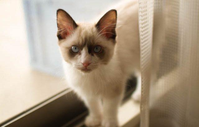 長毛猫は結構大変です