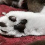 猫のヒーリング力
